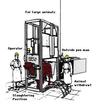 Restraint Of Livestock