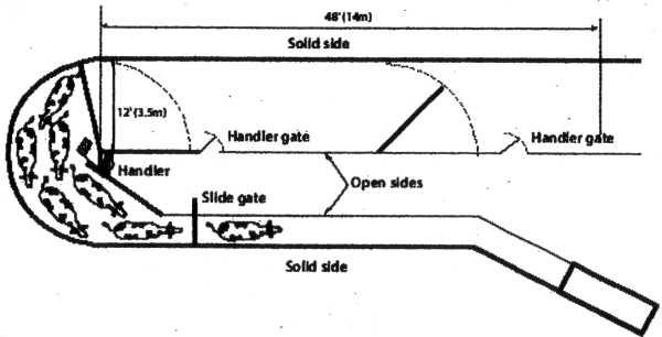16 Luxury Artificial Insemination Diagram on